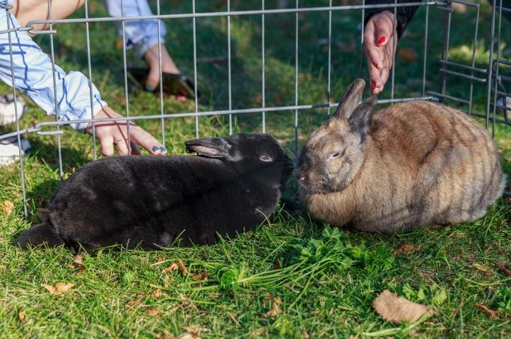 walk rabbits